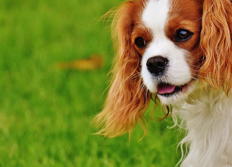ペットの老いの兆候に気をつけて健康寿命をのばす