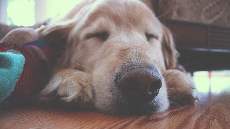 老犬に快適なバリアフリーの環境を。