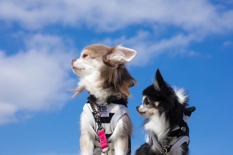 老犬でもペット保険に入れる?加入するメリットを解説