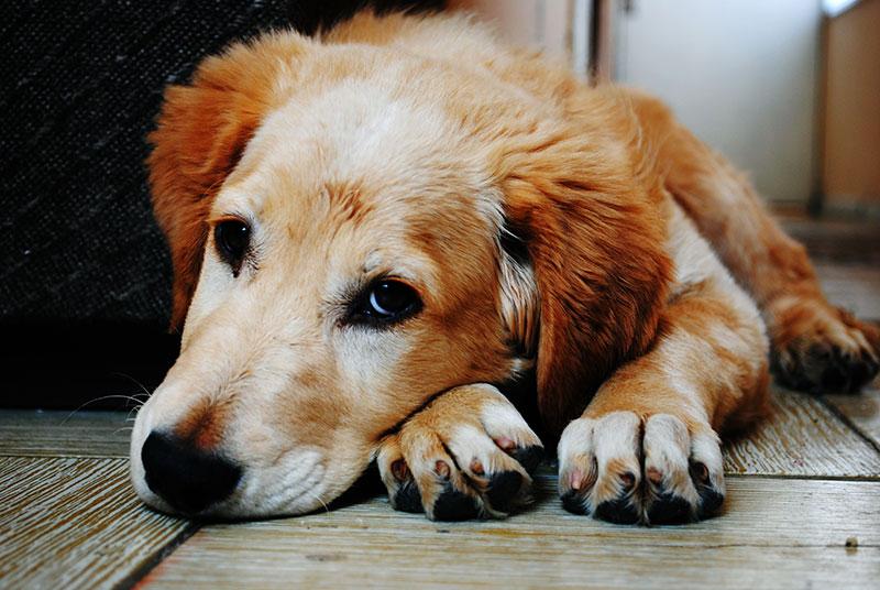 老犬の介護用品にはどのような物があるの?