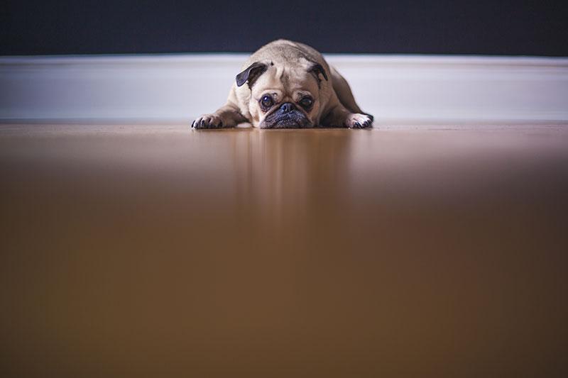 老犬の寿命は何歳くらい?知っておけば残りの時間を大切にできる