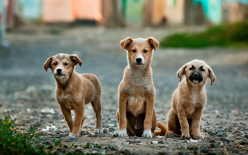 老犬のボケ防止!多頭飼いで心と体に刺激を与えよう