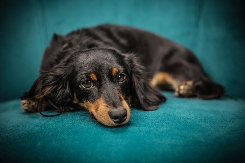 老犬が薬を飲んでくれない時の対処方法
