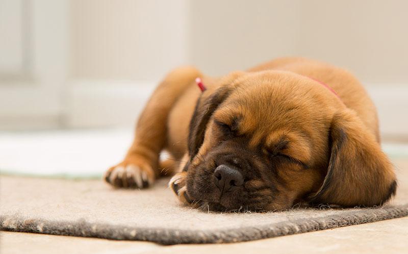 老犬の治療にセカンドオピニオンという選択肢