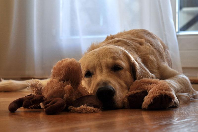 介護グッズで床ずれを防ぐ!寝たきりの老犬が快適に過ごすコツ