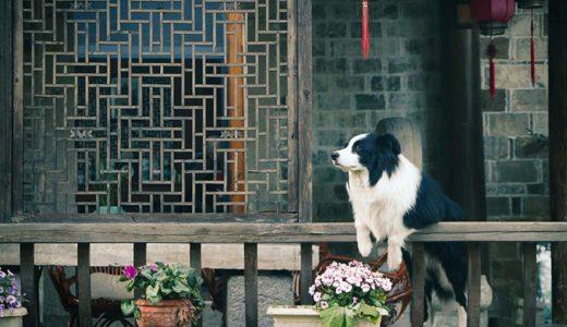 老犬ホームは、どこをポイントに選べはいいの?選び方を解説