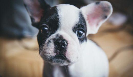 長年一緒に暮らしてきた老犬のために動物病院を選ぶポイント
