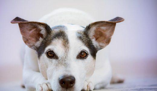 老犬もペットホテルに預けられるの?選ぶポイントは?