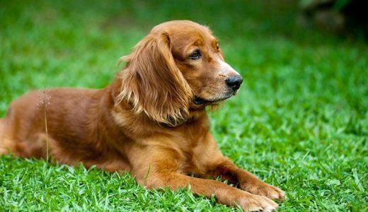 老犬をペットシッターに預けるときの注意点は?