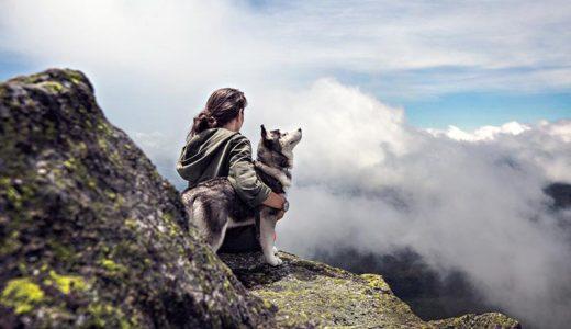 老犬を飼っている飼い主さんは注意!災害の準備はどうする?