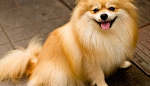 老犬の排泄のトイレ問題。オムツを履かせるべきなの?
