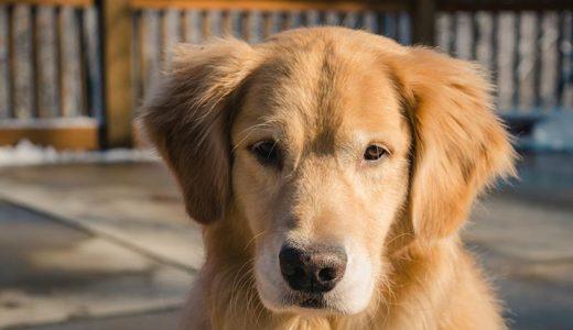 老犬のお留守番対策、どんなことに注意するべき?