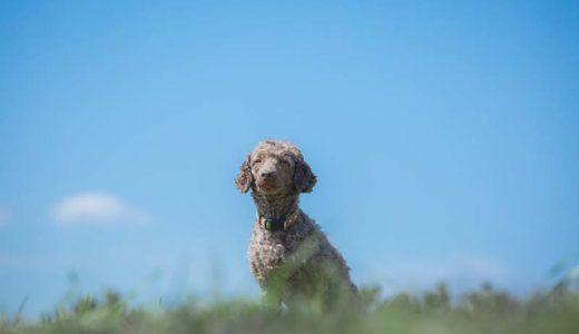 老犬用の便利なペットカートの選び方。歳をとっても楽しい散歩を。
