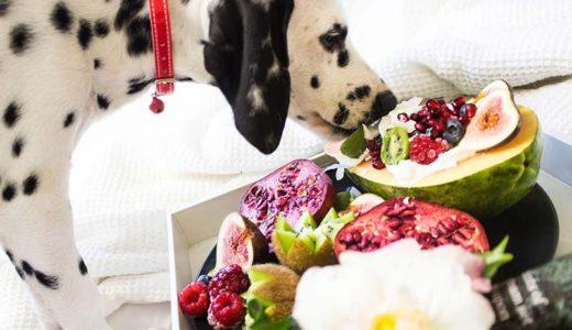 【要注意】犬に与えて良い果物とダメな果物があるの知っている?