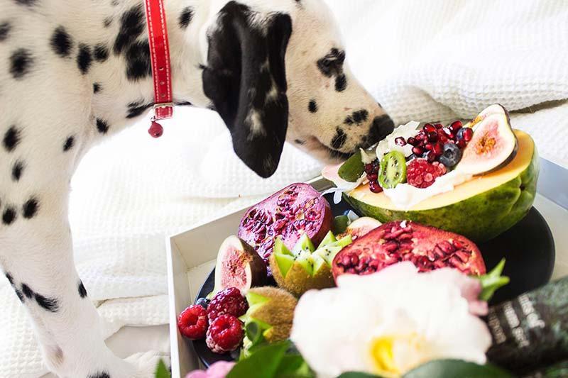 犬が食べていい果物