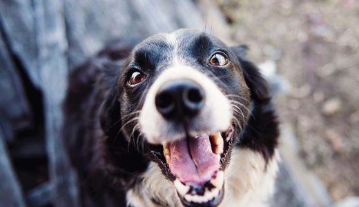 犬が喉に詰まらせやすい食材と予防法