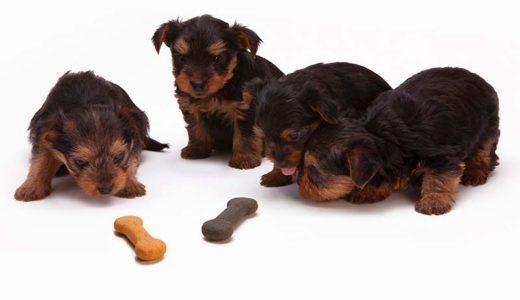 愛犬の誤食・誤飲は危険!やめさる方法と対策