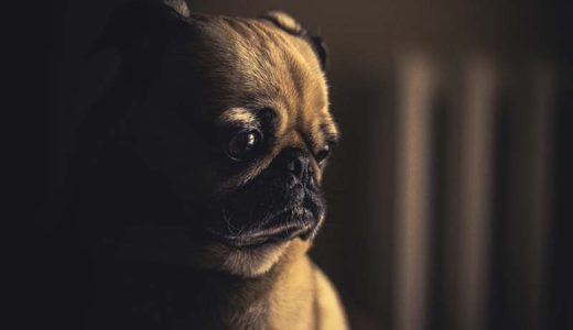 叱るのは逆効果!愛犬が言うことを聞かない時のしつけ方
