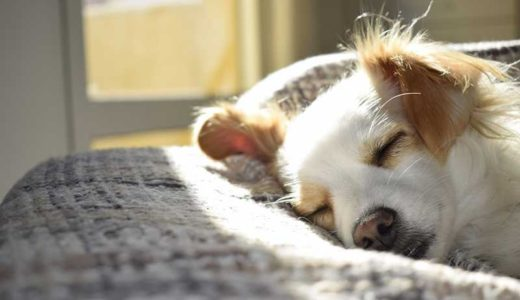 本当に、犬に栄養補助食としてサプリメントは必要?効能と選び方