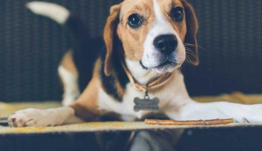 犬がうんちを食べるのは病気?食糞の4つの原因と効果的な対策