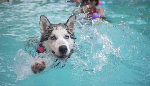 皮膚病や皮膚炎の犬におすすめのシャンプーは?原因と洗い方