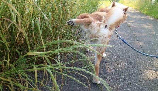 犬のおしっこ(尿)が黄色いけど大丈夫?尿が濃い原因を解説