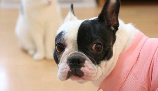 犬の留守番が心配!ペット用見守りカメラのおすすめ人気ランキング5選