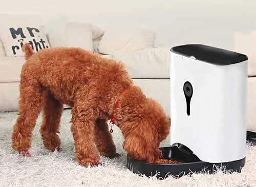 犬の留守番カメラ1