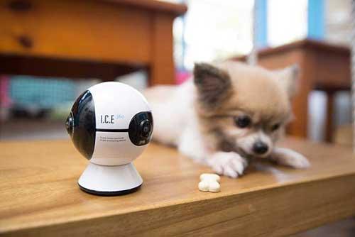 犬の留守番カメラ5