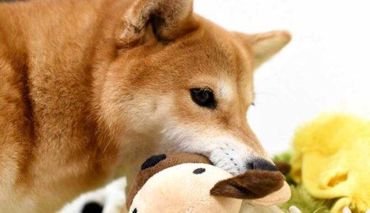 犬の留守番おもちゃ2
