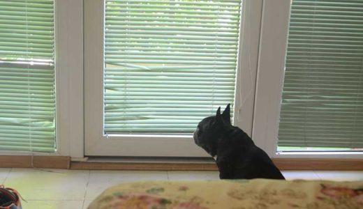 犬の留守番中のトイレ失敗2