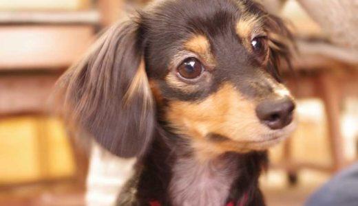 犬の体内に入れるマイクロチップって何?本当に必要なの?