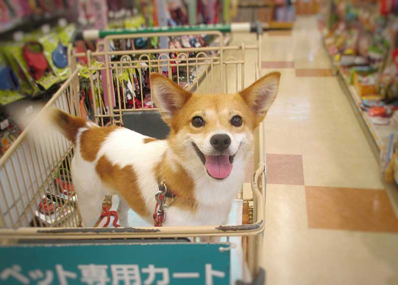 市販で老犬におすすめドッグフード