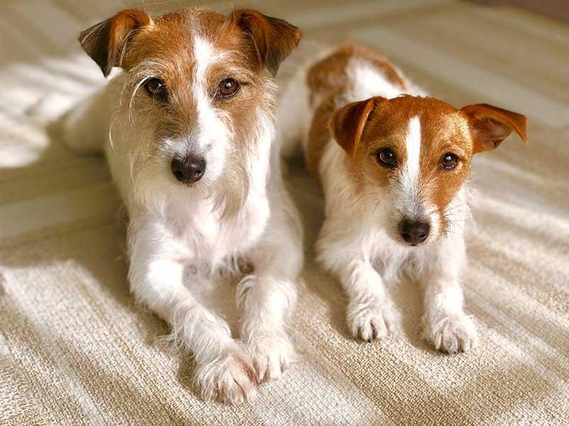 子犬の下痢の原因