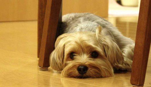 子犬の下痢は病気なの?慌てず、下痢の原因と対処法を知る