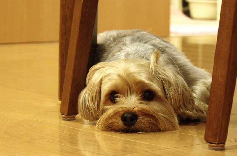 子犬の下痢